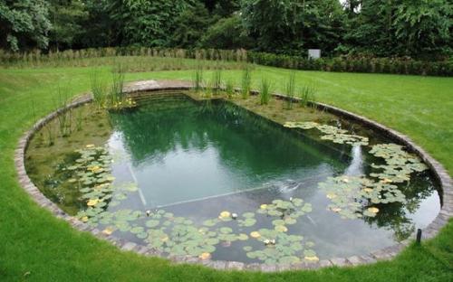 Естественный бассейн, Author: Sanny, Hcpslibraries